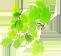 ekologiczne liście 2