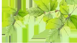 ekologiczne liście